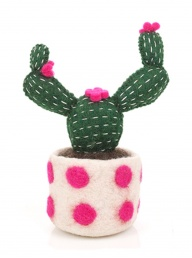 Opuntia Cactus - Pink Spotty